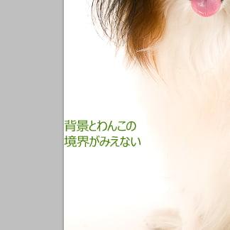 毛モッサー02